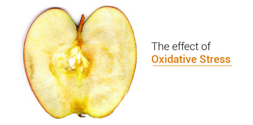 apple-oxidative-stress